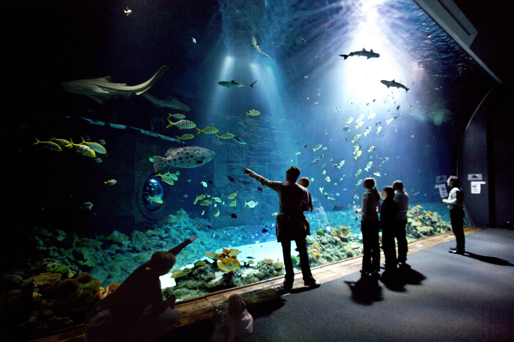 im tropen aquarium gibt es viele exotische tiere zu entdecken zum beispiel riffhaie und. Black Bedroom Furniture Sets. Home Design Ideas