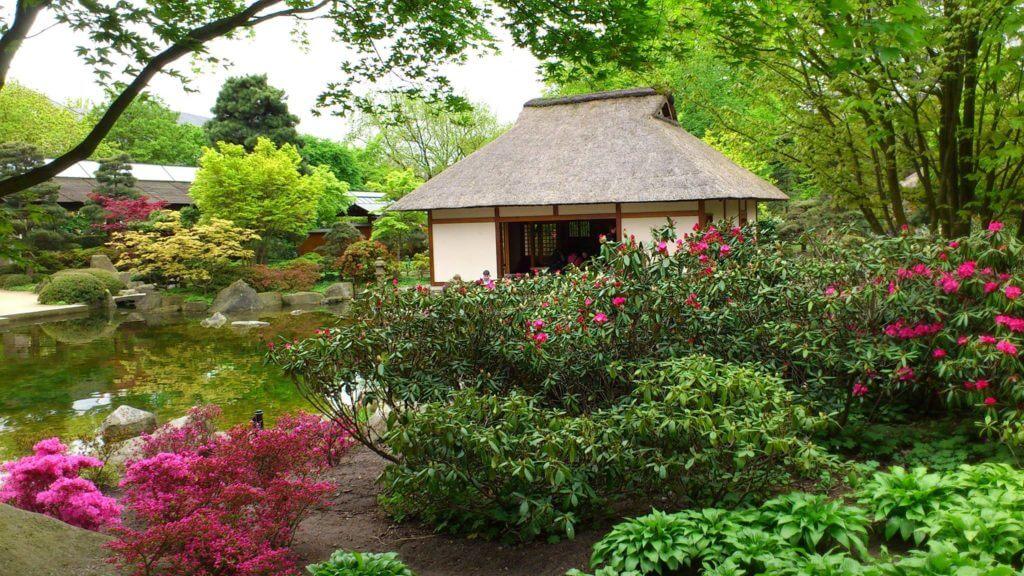 Teeliebhaber hergehört! Im Japanischen Garten kannst du bei einer Teezeremonie dabei sein!